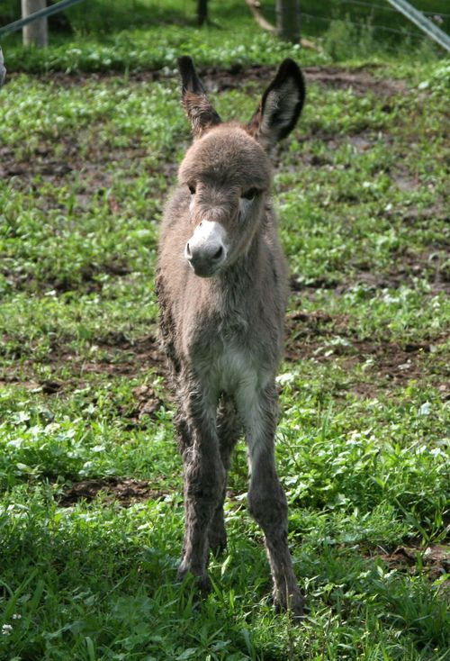 Penelope's foal 014-1