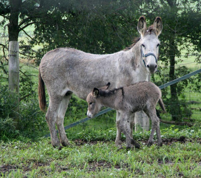 Penelope's foal 027-1