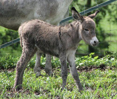 Penelope's foal 054-1